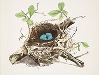 Nest Illustration